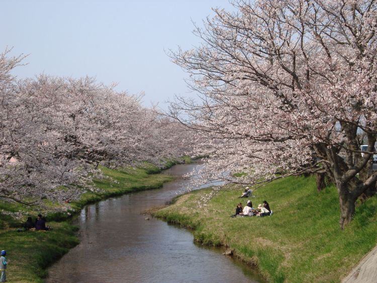 Tamatsukuri Onsen - Cherry Blossom by the river