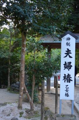 Sanctuaire Yaegaki, Couple Camélia - Matsue