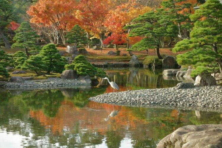 Un héron se baladant près de l'étang.