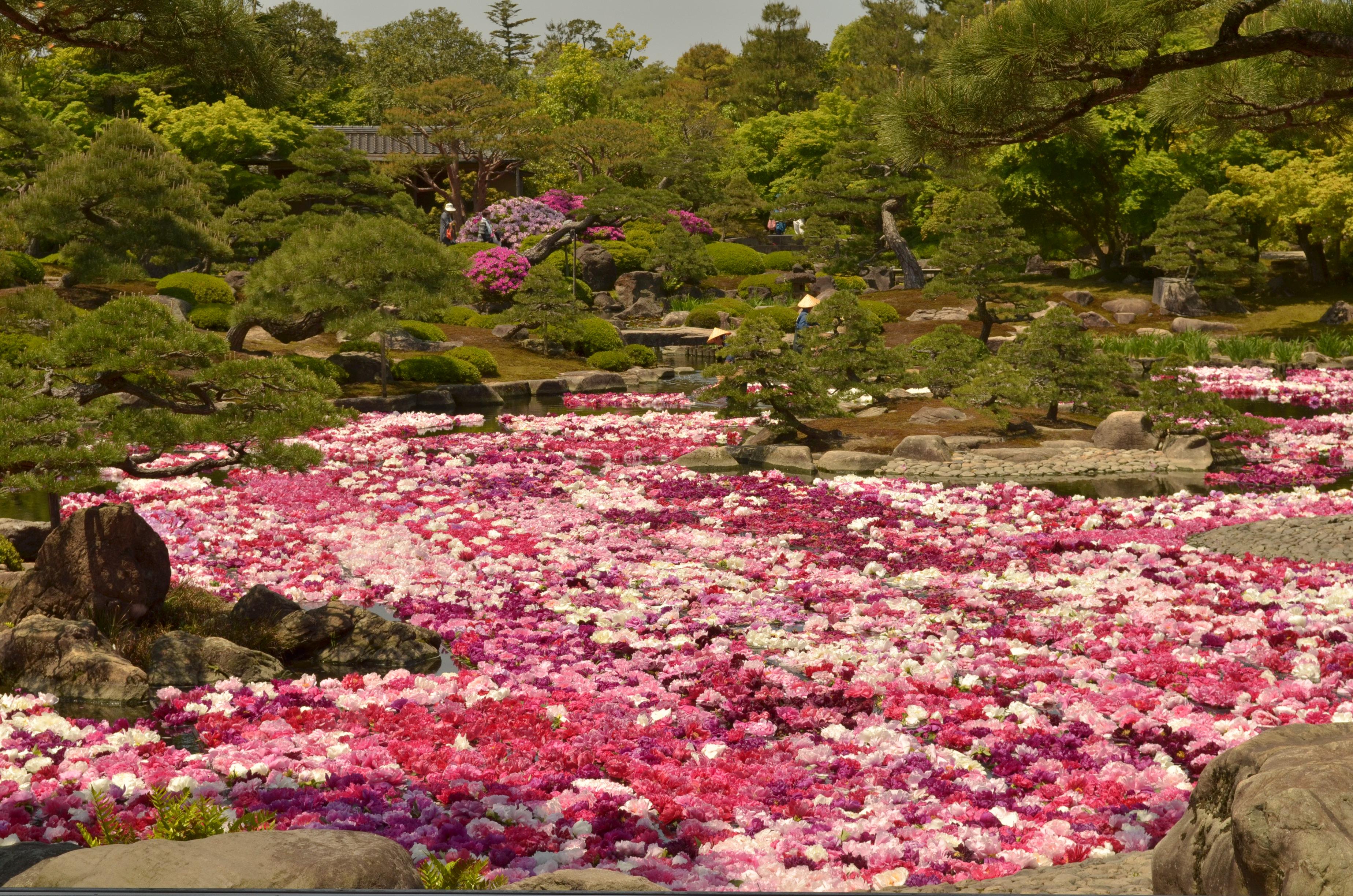 Le jardin japonais yushien d couvrez matsue for Le jardin des fleurs