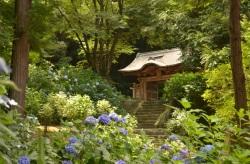 Gessho-ji Hydrangea Temple - Stairs - June 2014 - Matsue