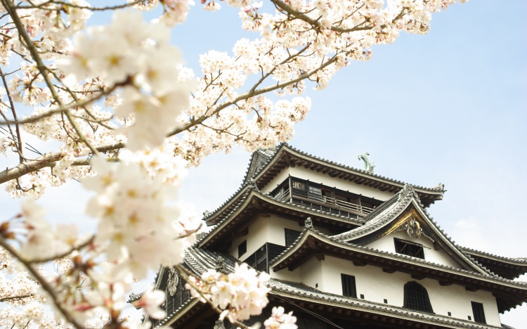 Le château de Matsue au printemps