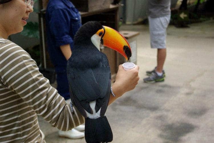 Les oiseaux viennent se poser sur votre bras