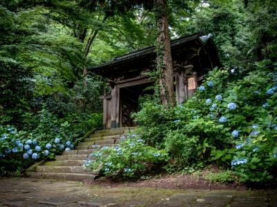temple bouddhiste gesshô-ji gesshoji hortesias Chateau Matsue Matsue Shimane Japon Japon Castle rural donjon Edo histoire voyage tourisme authentique