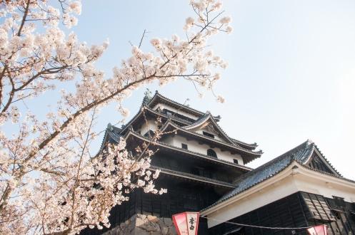Matsue Shimane Japon tourisme voyage trip rural authentique reculé chateau edo cerisier sakura hanami