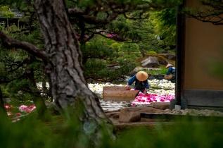 Yuushien yushien daikonshima japonais jardin traditionnel pivoines Matsue Shimane Japon tourisme voyage vacances rural