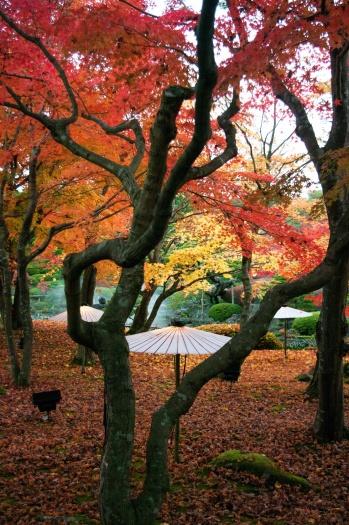 Yuushien yushien daikonshima japonais jardin traditionnel pivoines Matsue Shimane Japon tourisme voyage vacances rural momiji érables