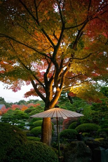 Le jardin japonais Yuushien | Promenade, pivoines, ginseng ...